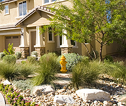 Drought Resistant Landscaping Xeriscaping Los Angeles