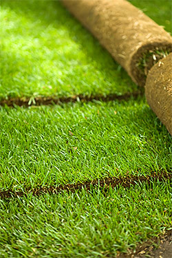 Sod & Seed Lawns
